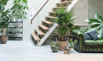 Huiskamer met planten