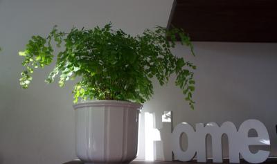 Win een boek over planten in huis